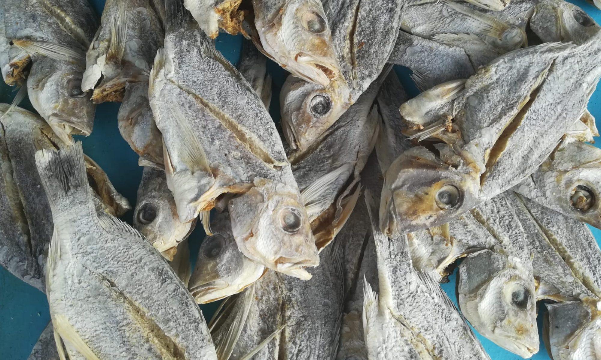 www.fishwelfare.ch